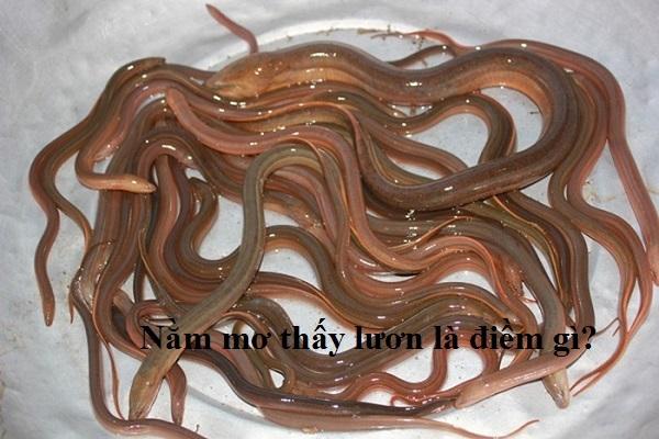 Nằm mơ thấy bắt được lươn nên đánh đề con gì số bao nhiêu