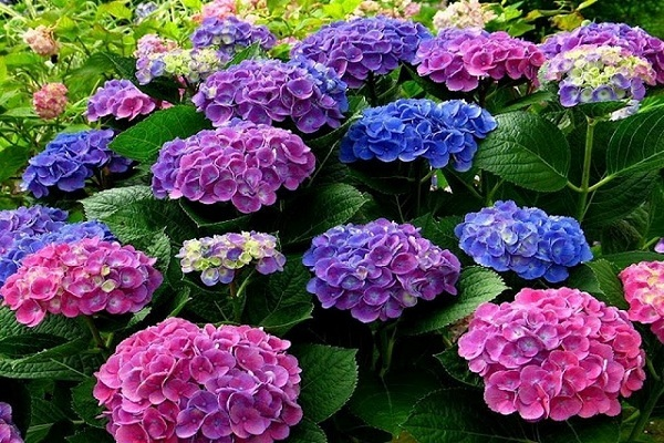 hoa mang ý nghĩa lạnh lùng vô cảm