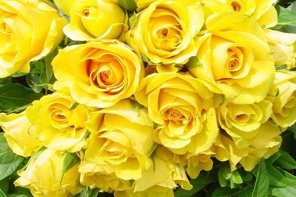 hoa sinh nhật cho người lớn tuổi