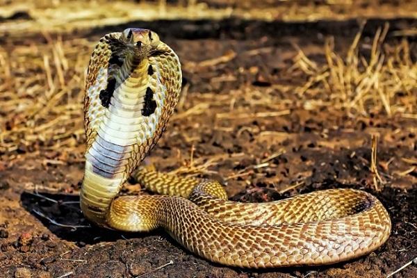 Nằm mơ thấy rắn điềm báo gì
