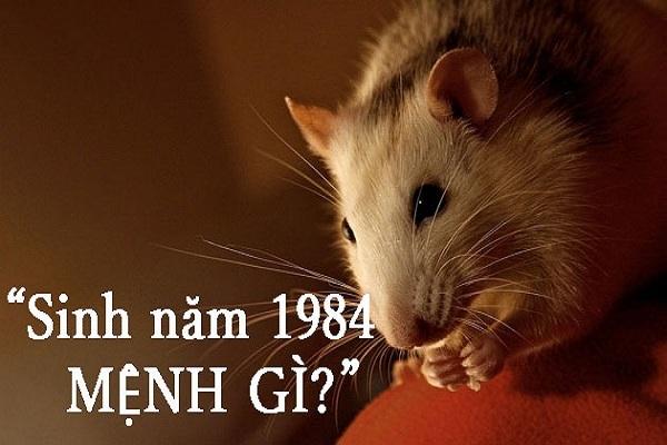 Người sinh năm 1984 tuổi Giáp Tý thuộc mệnh gì