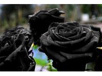 Những loài hoa mang ý nghĩa tượng trưng cho nỗi buồn cô đơn