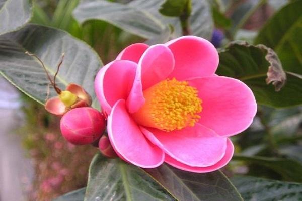 tên loài hoa mang ý nghĩa lạnh lùng vô cảm