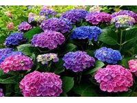 Tên những loài hoa mang ý nghĩa lạnh lùng vô cảm