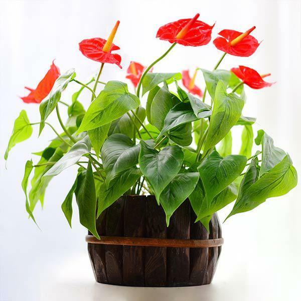 Tuổi Mùi nên trồng cây gì là tốt