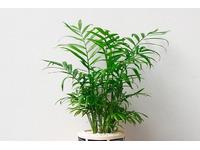 [Tư Vấn] Tuổi Mùi nên trồng cây gì là tốt