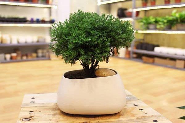 Tuổi Thìn nên trồng cây gì là tốt