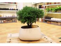 [Tư Vấn] Tuổi Thìn nên trồng cây gì là tốt