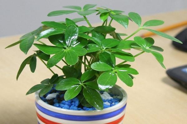 Tuổi Tỵ nên trồng cây gì là tốt