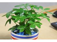 [Tư Vấn] Tuổi Tỵ nên trồng cây gì là tốt