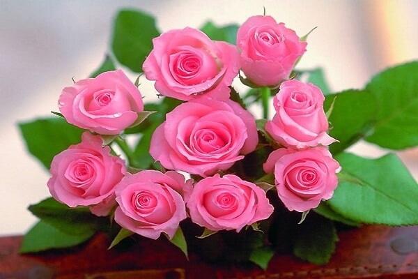 ý nghĩa của 9 bông hoa hồng