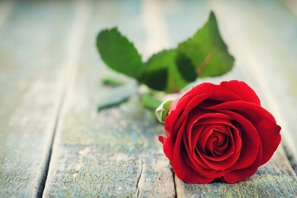ý nghĩa của số lượng hoa hồng